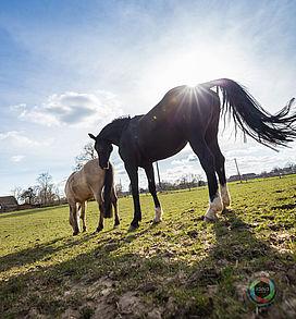 Pferd_05