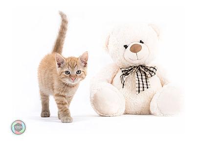 Kitten with Teddy Bear