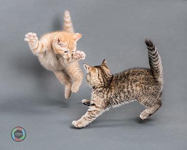 Spielende Kätzchen