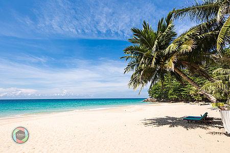 Strand mit Palme in Phuket, Thailand